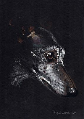 Whippet *  Windhund  ***  Levrier  ****   * Limited  Print  #  229
