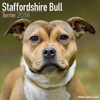 Calendrier 2018 - STAFFORDSHIRE BULL TERRIER