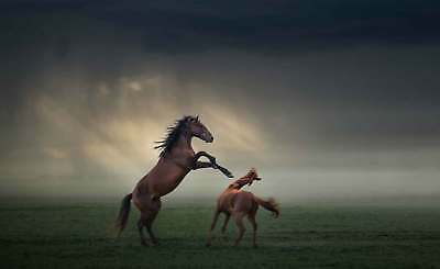WALL MURAL PHOTO WALLPAPER XXL Horses Rearing Fight Storm Clouds Sky (1X-1088258