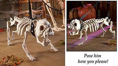 Posable Skeleton Dog Halloween Decoration comes with spiked collar and a leash