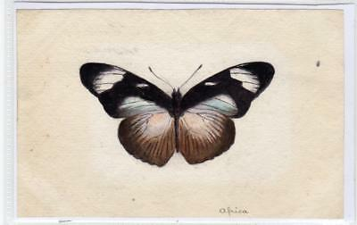 Watercolour painting of a butterfly  (C29617)