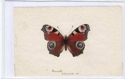 Watercolour painting of a butterfly  (C29620)
