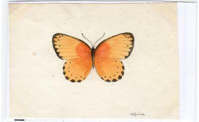 Watercolour painting of a butterfly  (C29622)