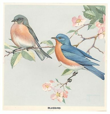 "Large Bird Poster Stamp  Blue Bird  7.5""x7.75""   Full Gum Artist Signed Peterson"