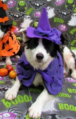 Dogs Halloween Fancy Dress Costume Wicked Witch Hat & purple Cape by Mrs Nibbles