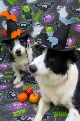Dogs Halloween Fancy Dress Costume Wicked Witch Hat with personalised name
