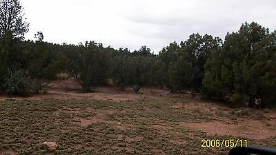 20 Acres South Of I-40 Owc Great Terms - Really Nice Piece Privacy Quiet Rural