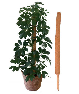 Coconut Coco Poles Climbing Plants Support Stake Pole Coir Creeper Trellis Frame