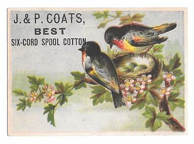 Nature trade card: A pair of colorful birds on their nest  (J. & P. Coats)