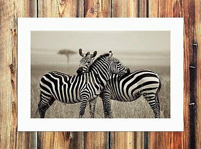 A zebra Painting HD Print on Canvas Home Decor Paintings Room Wall Art Pictures