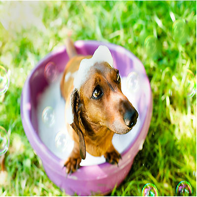 Pet care and Dog walking business - Run from your home office very low overheads