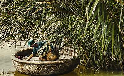 WALL MURAL PHOTO WALLPAPER XXL Vietnam River Man Coracle Boat Palm Asia (JD-1162