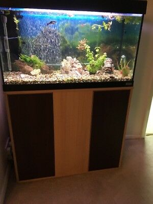 Large fish tank with tropical set up picclick uk for Fish tank set up