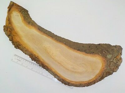 English Oak wood board with natural waney live edge & bark. House sign. 1258