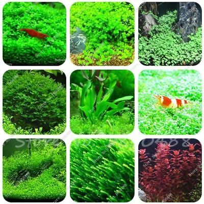 500 / Lot de 1000 Aquarium pelouse graines (mélange) eau plante aquatique