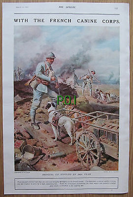 (XX7) French Canine Corps Dog Team World War One  S Eduard - 1918