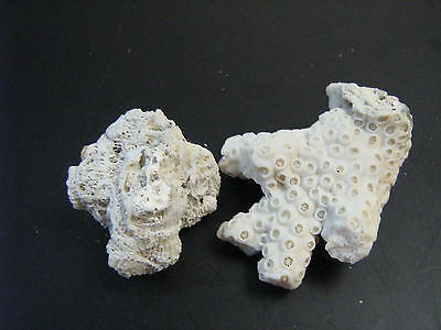 2  Amazing Pieces of Sea CORAL~great for aquarium & Home Decor~
