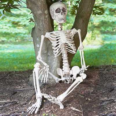 Halloween 3ft giant life size poseable skeleton Perfect decoration for parties