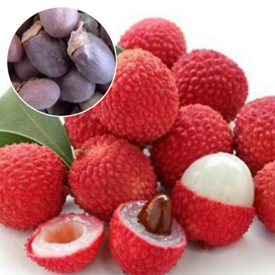 10 Pcs Lychee Tree Seeds Outdoor Fruit Tree Seeds for Home Garden Planting