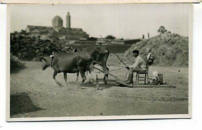 Cyprus Rp Sledge Pulled By Oxen Rural Life Mangoian