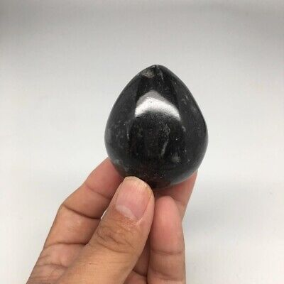 """151.4g, 2.2""""x1.8"""" Hand Polished Fossil Orthoceras Stone Egg from Morocco,FE78"""