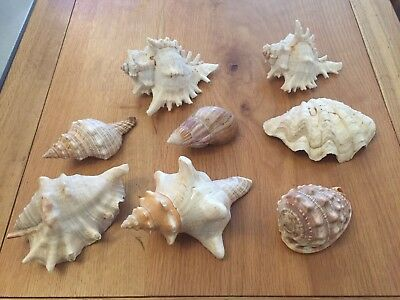 Collection of 8 Beautiful Sea Shell Bathroom Ornaments