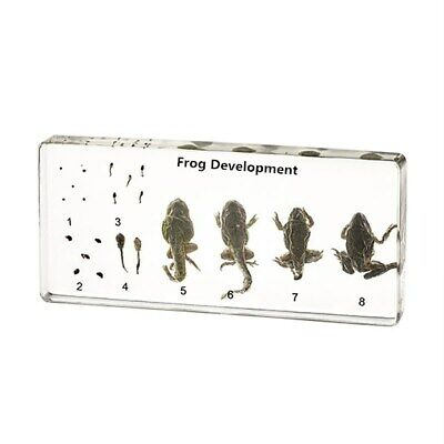 Frog development embedded specimens animal Embedding specimens