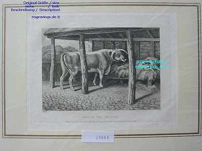23863-Fabeln-Fables-SAMUEL HOWITT-Dog in the Manger-K