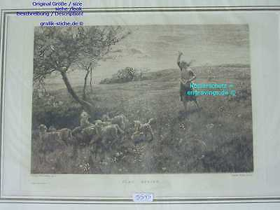 5545-Schafe-Sheep-R-1890