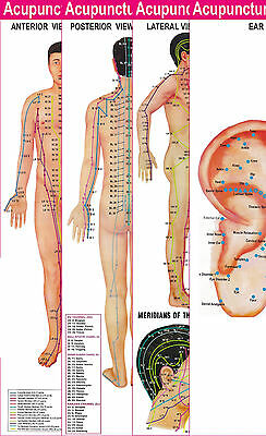 Acupuncture Points 3 Body 1 Ear Charts Set Of 4 Free 5 Sujok