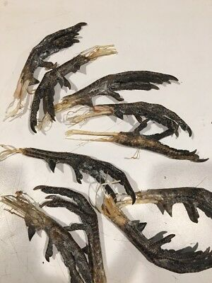 DRIED RING-NECK PHEASANT FEET ROOSTER SPURS LEGs TOEs LOT TAXIDERMY CLAWS FAN