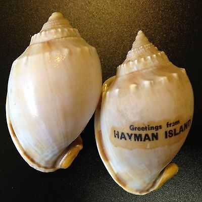 Vintage - Real Shell Salt & Pepper with Cork Stoppers, Hayman Isl Souvenir
