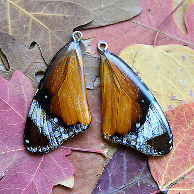 1 REAL Butterfly Wing Charm Preserved in Resin - Nature Pendant Insect Charm