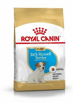 Pienso Royal Canin JACK RUSSELL TERRIER JUNIOR perros cachorros (Menos 12 meses)