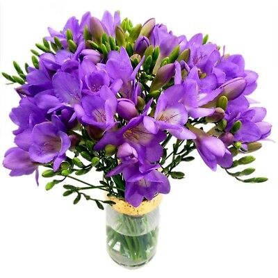 Clare Florist Purple Freesia Bouquet - Fresh Fragrant Freesia Flowers to Brighte