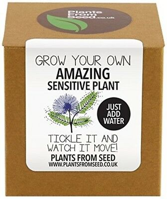 Plants From Seed Grow Your Own Sensitive Plant Kit