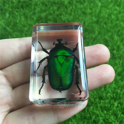 RESIN CASED EMERALD BEETLE Insect Paperweight Crafts As Gift Small Block 45x30mm