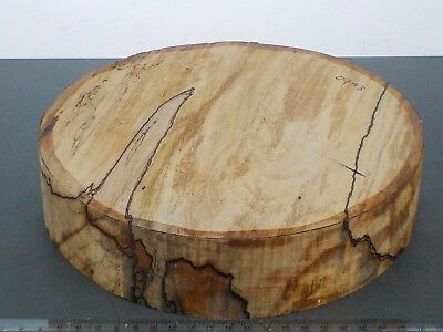 English Spaled Beech wood turning bowl blank.  230 x 50mm. 0943