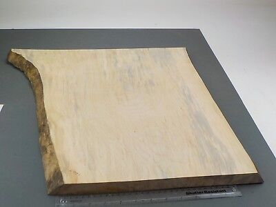 Waney Edged Spalted English Sycamore wood board. 370-530 x 670 x 21mm. 1267