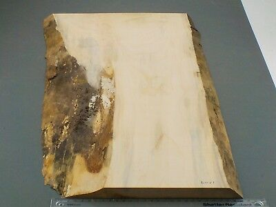 Waney Edged Spalted English Sycamore wood board. 305-370 x 18 x 795mm. 1269