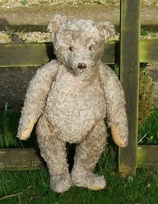 "Rare 29"" Antique, Steiff Bear, Button In Ear - Special Offer Price"