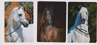 Swap Playing Cards 3 stunning    arabian horses