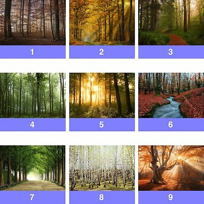 Forest Trees Nature Wall Mural Photo Wallpaper FW-WM