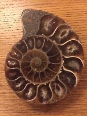 Polished Ammonite Fossil Half from Madagascar - Cretaceous Period - Deep Crystal