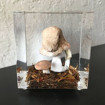 Vintage LUCITE Paperweight NATURAL MUSHROOM Terrarium ACRYLIC Block CUBE Unique