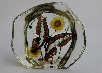 Transparent Resin Decoration Insect embedded Specimen Butterfly specimen Gift