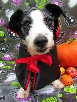 Dogs Halloween Fancy Dress Costume Count Dogula Dracula Cape by Mrs Nibbles
