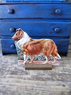 Antique Cardboard Scotch Collie Dog  with Stand from 1940s School Set