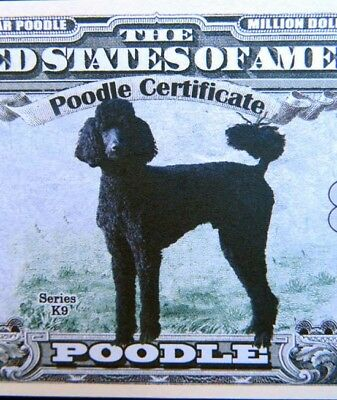 Poodle dogs FREE SHIPPING! Million-dollar novelty bill