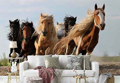 Horse Herd Galloping Photo Wallpaper Wall Mural (1X-1276656)
